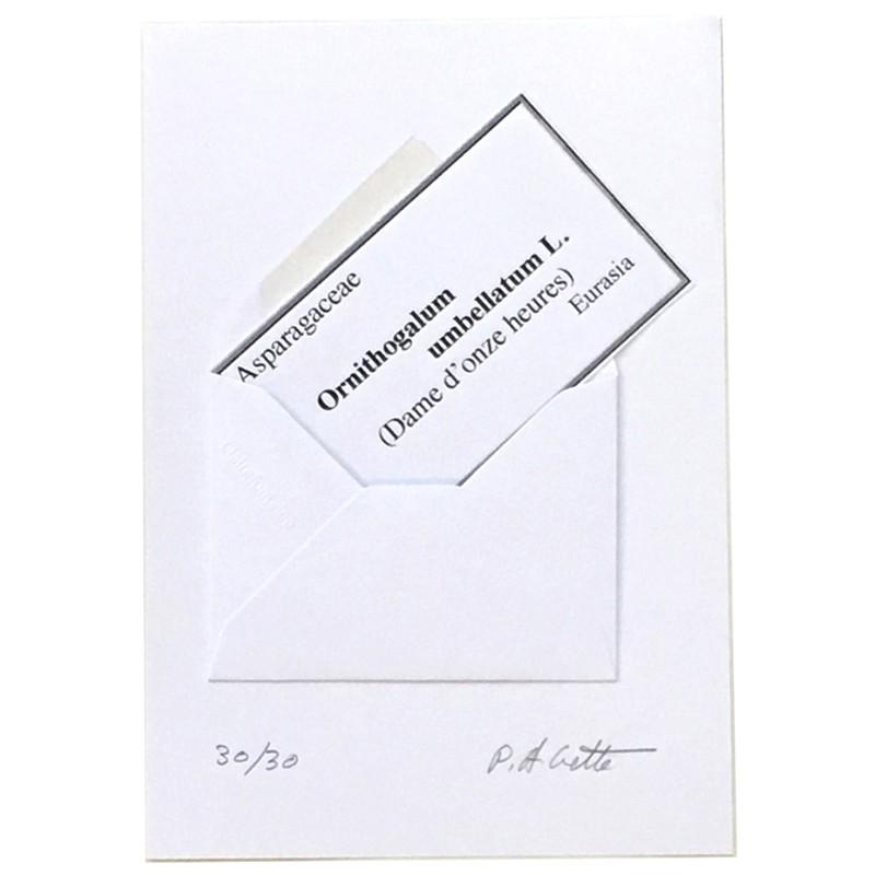 multiple de Paul Armand Cette, courrier botanique, collage réalisé par l'artiste, signé et numéroté